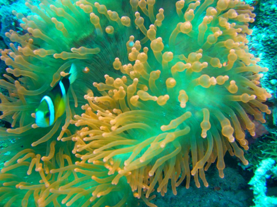 Bizim Nemo
