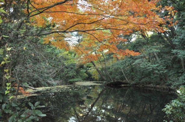 Ormanda bir de gölet var