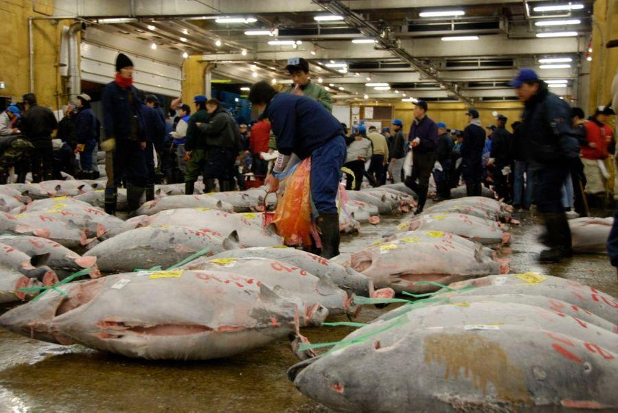 Tokyo Tsukiji Balık Halinden bir enstantane, bir kış sabahı 5:30 civarında çekilmiştir