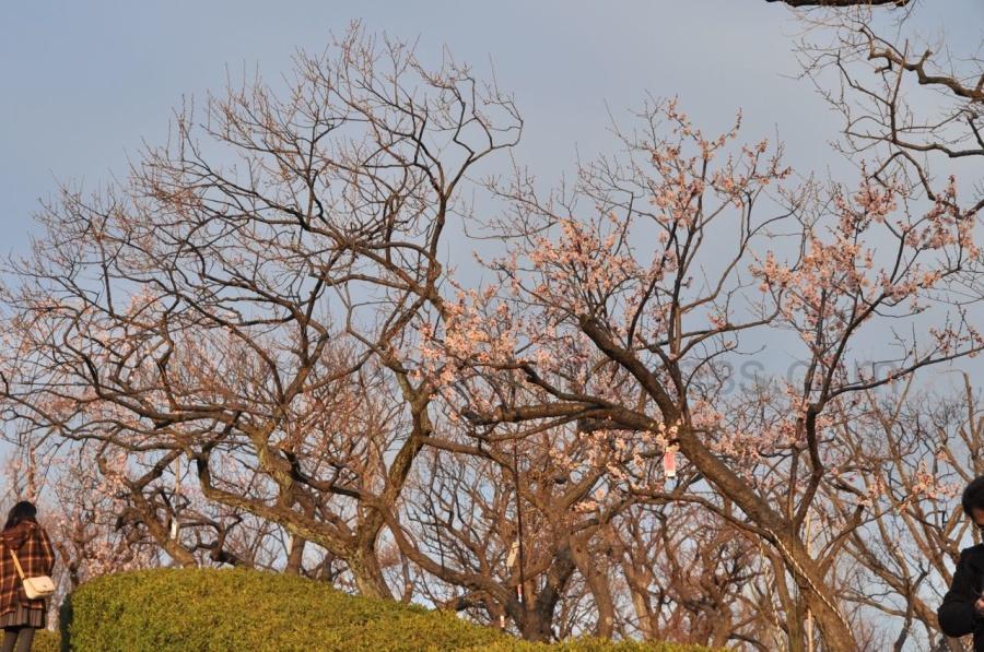 Hanegi Parkı, Umegaoka (Erikli Vadisi) kapısı girişi