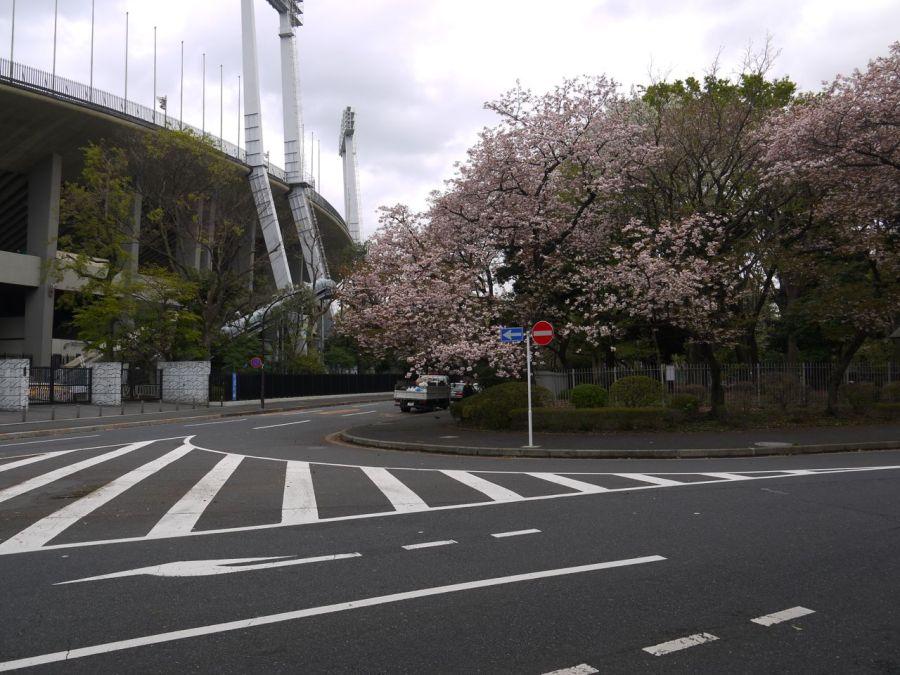 Spor kompleksi içinde hala biraz da olsa sakura çiçekleri kalmiş