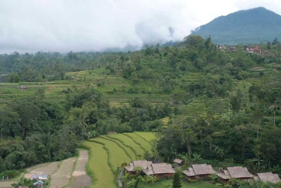Teras şeklindeki pirinç tarlaları