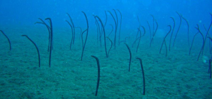 Denizin dibi