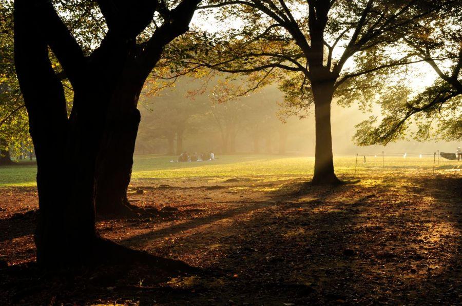 Yoyogi parkta bir sonbahar enstantanesi
