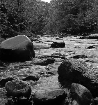 nehir012
