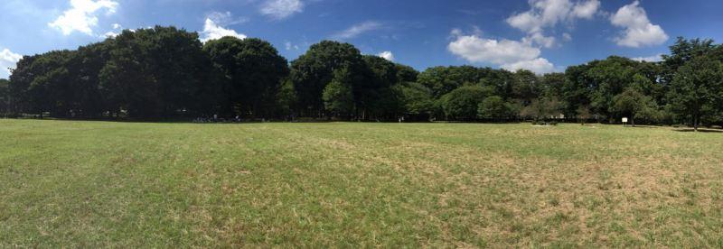 Kinuta Parkında alabildiğince açık alan ve ağaçlık var