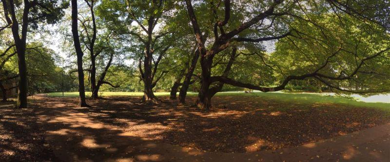 Parkın içinde orman da var