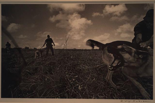 ABD'li askerler Okinawa'da köpek eğitirken